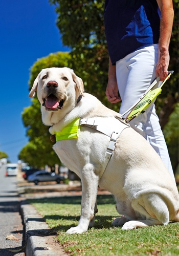 Guide Dog Tom with user Janine