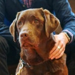 Guide Dog Coco