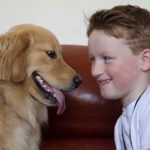 Golden labrador and boy sit, face each other