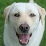 Companion Dog Demi