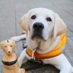 Guide Dog Puppy Simba