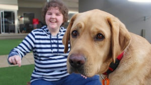 Yellow labrador looks at the camera with young girl in the background