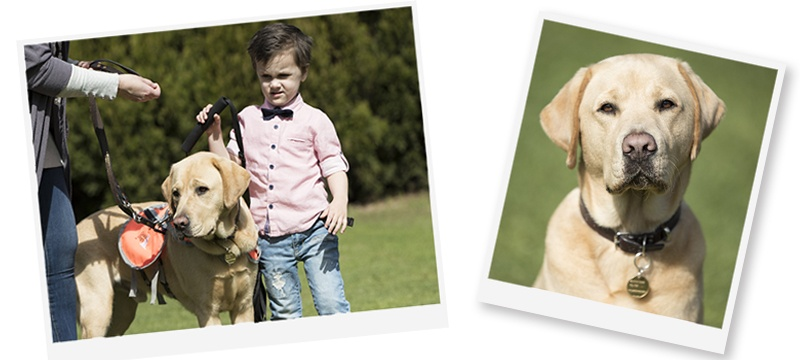 Four year old Fletcher with his Autism Assistance Dog Koha.