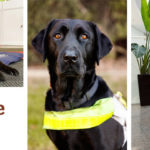 Montage of Eric with Guide Dog Sundae