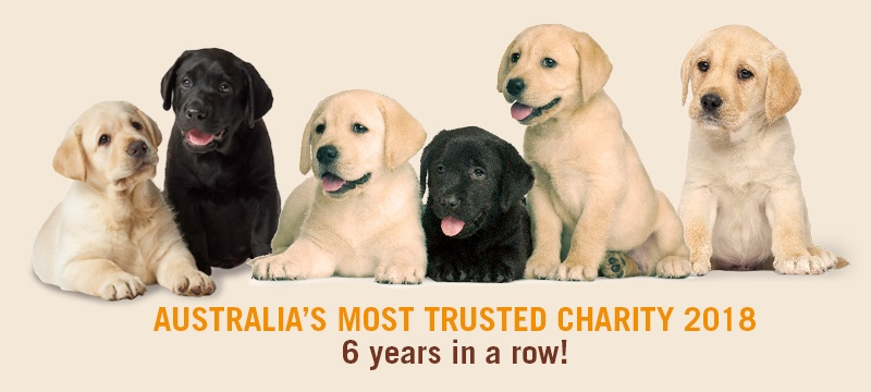 Six labrador puppies. Text reads Australia's Most Trust Charity 2018, 6 years in a row!