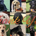 Montage of labradors. The words Thank You are overlaid on the image