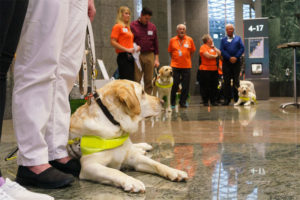 Several Guide Dogs lined up prior to Graduating