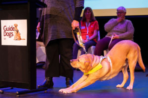 Guide Dog Major Stretches During Graduation
