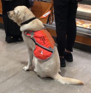 Autism Assistance Dog Jacket