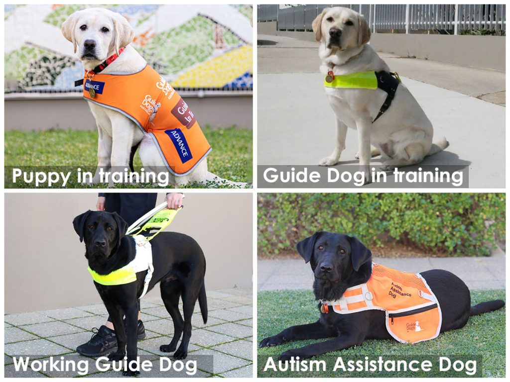 Montage of Guide and Assistance Dogs with different types of harness