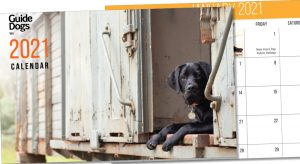 Guide Dogs WA printed calendar cover with photograph of labrador puppy in an old train carriage
