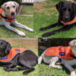Montage of Ambassador Dogs