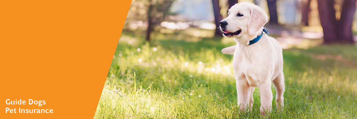 Insurance For Dogs >> Guide Dogs Pet Insurance Guide Dogs Wa