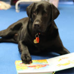 Therapy Dog Bazza with book