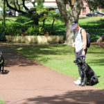 Person walking with black labrador dog in harness with two people looking on