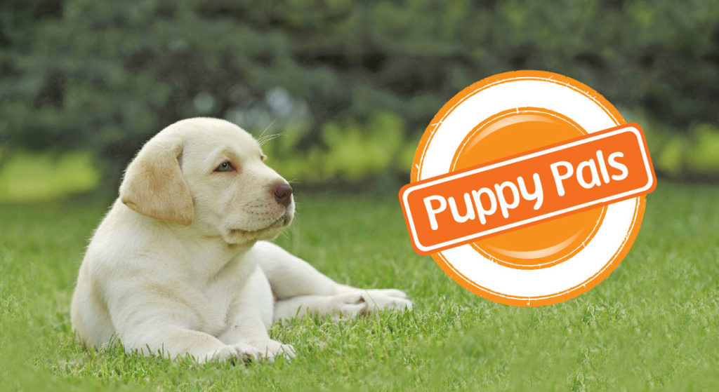 Become A Regular Donor Puppy Pal