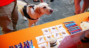 Guide Dog in training looks at Guide Dogs WA merchandise stall