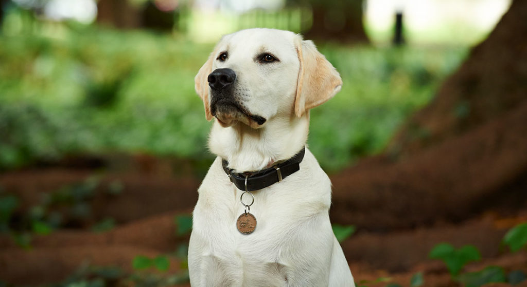 About Guide Dogs WA