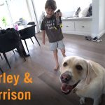 Autism Assistance Dog Harley and Harrison