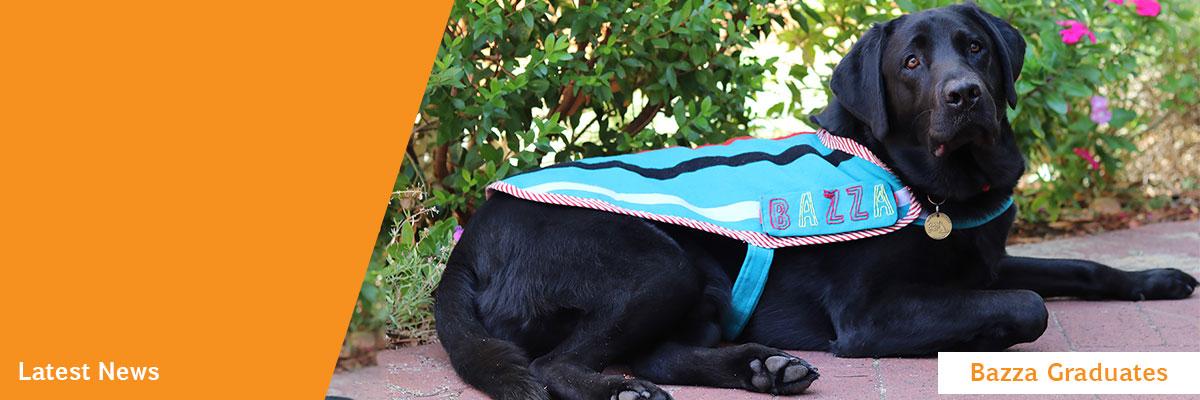 Children's Therapy Dog, black labrador Bazza