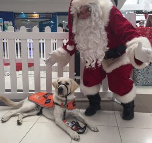 Yellow labrador Stanley is sitting on the floor in a shopping centre with Santa standing next to him.
