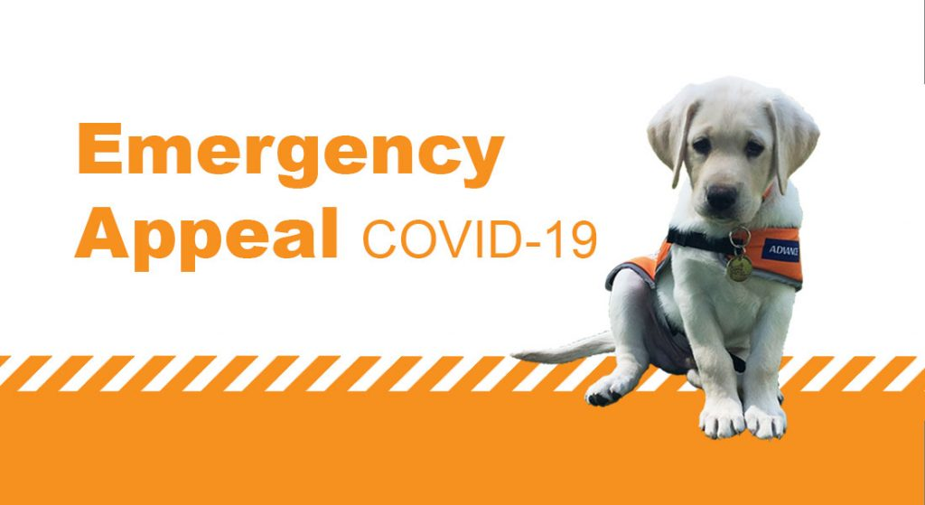 Yellow labrador in orange jacket sits facing the camera. Orange text reading Emergency Appeal COVID-19 is overlaid on the image