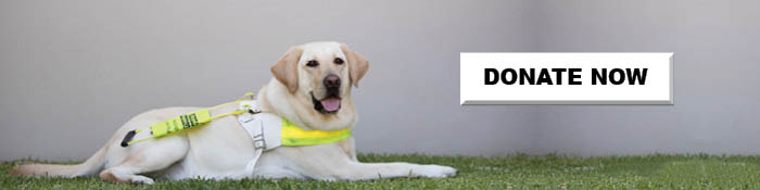 Guide Dog in harness on the grass. Text Button: Donate Now