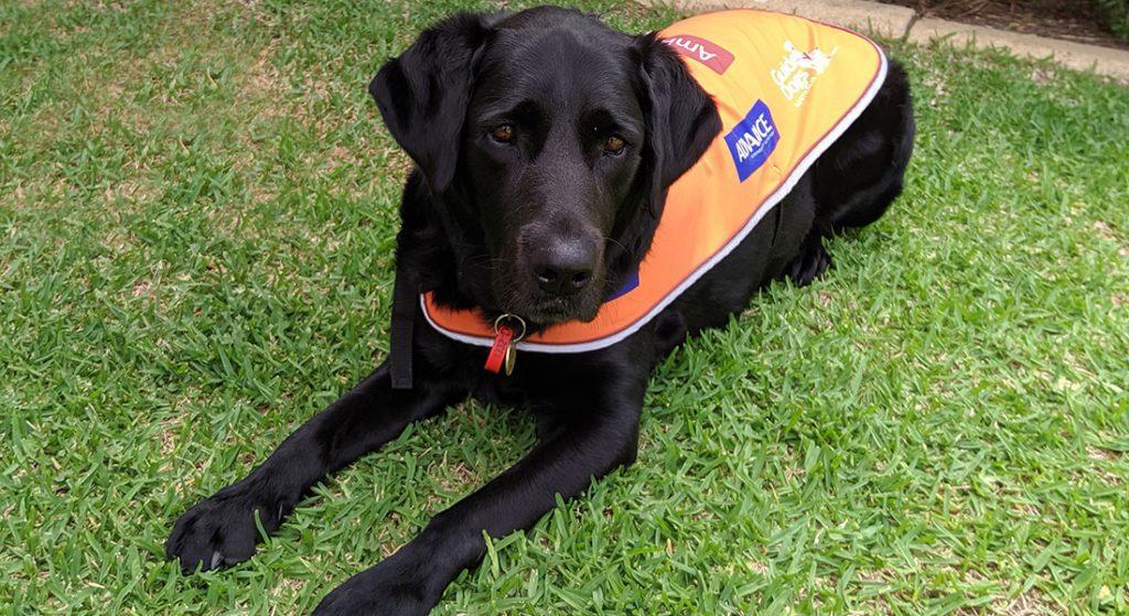 Ambassador Dog Eva
