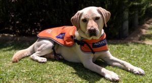 Ambassador Dog Annie