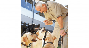 Guide Dog Mobility Instructor Phil with yellow labradors