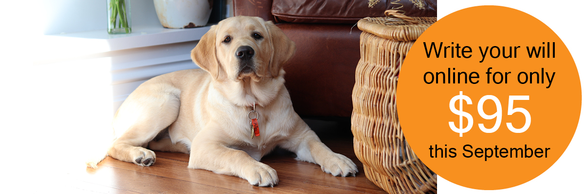 Labrador puppy is sitting on the floor in front of a lounge.