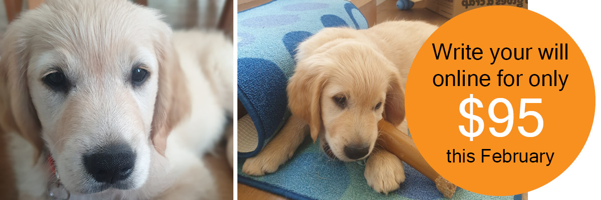 two photos of golden retriever puppy. Text reads; write you will online for only $95 this February.