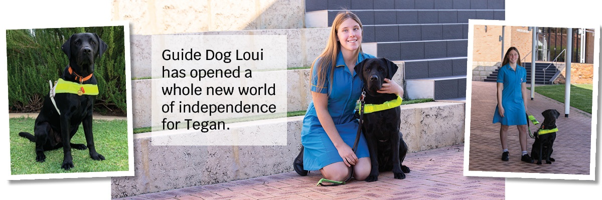 Montage of two photos of Guide Dog Loui with school student Tegan, and a photo of Guide Dog Loui in harness. Text: Guide Dog Loui has opened a whole new world of independence for Tegan.