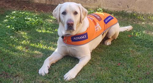 Ambassador Dog Stewart