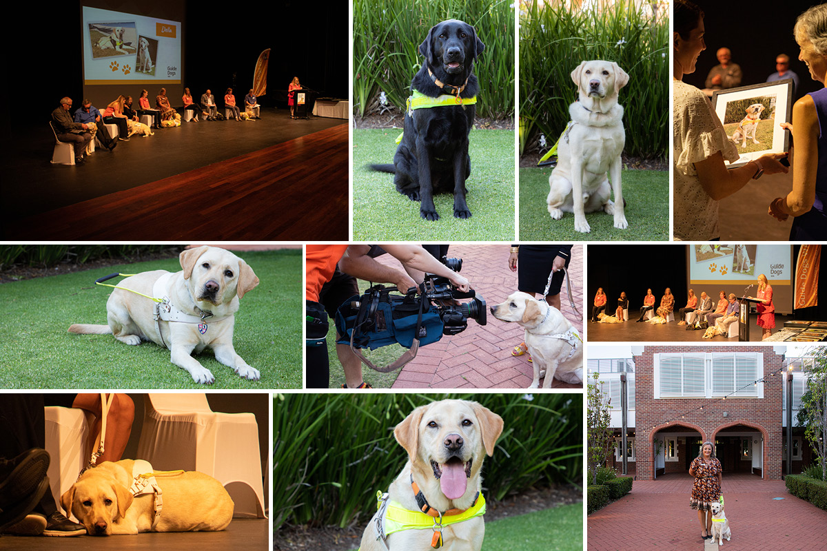 Montage of photos of graduating dogs and handlers at their graduation cerempny