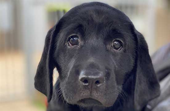 Image of puppy in training Graham