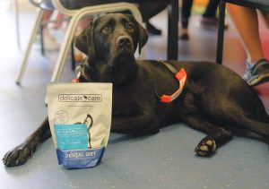 Photo of black dog laying on floor with Delicate Care product