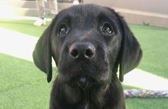 Photo of black puppy sitting on grass looking to camera