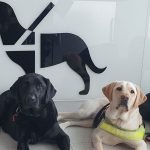 Three dogs in training laying in front of new airport service animal relief area.