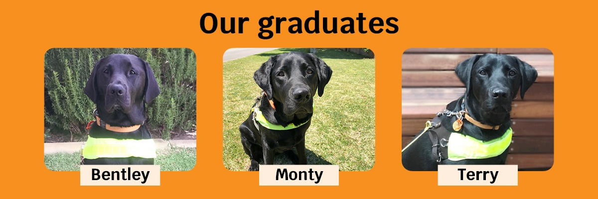 Our graduates, Bentley, Monty and Terry.