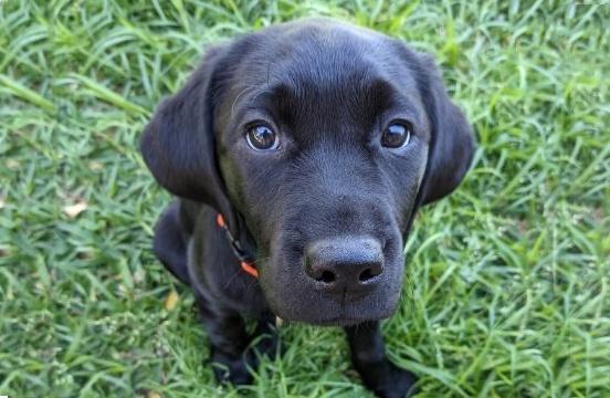 Black puppy sitting on grass.