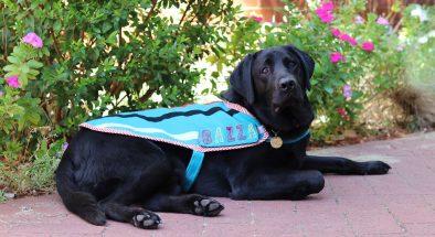 Children's Therapy Dog Bazza graduates